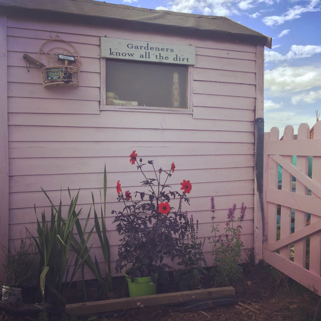 The famous pink shed of the Malahide Allotments