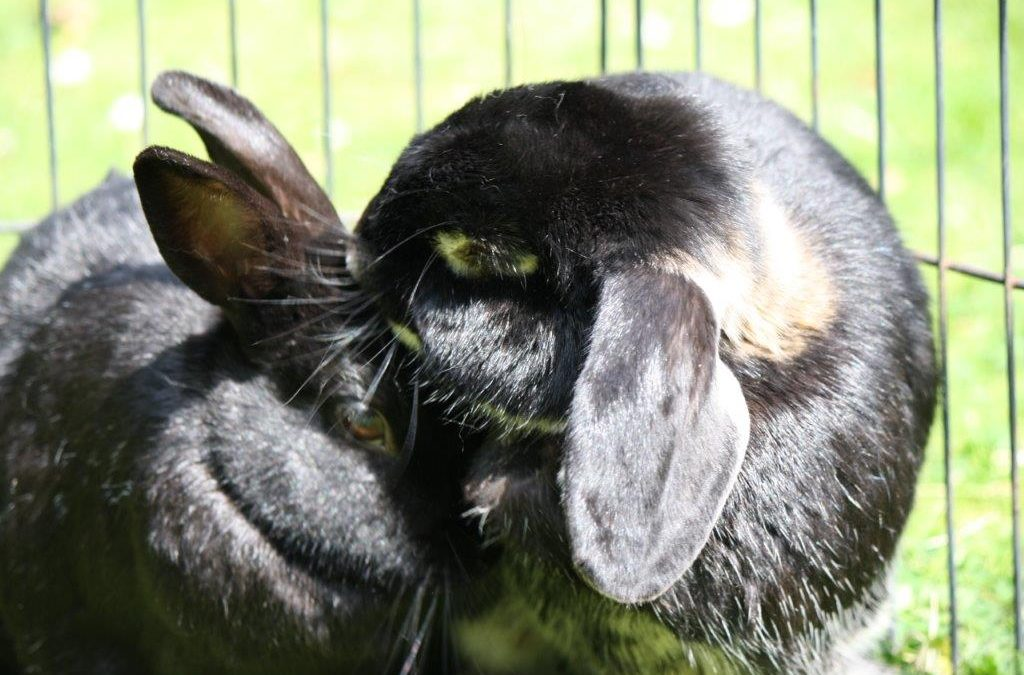 Love | Living with Bunnies