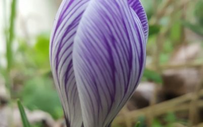 Six on Saturday – Bulbs of Colour