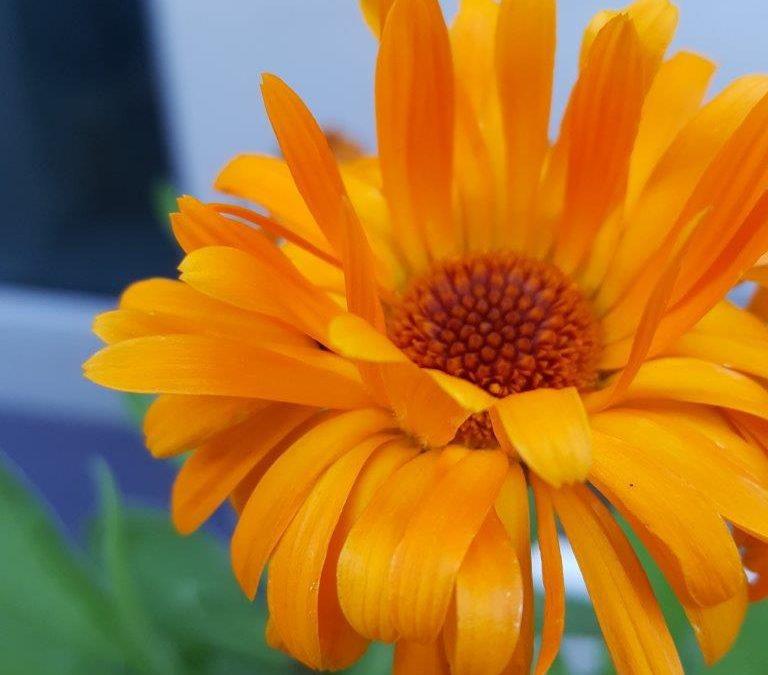 Grow | Six on Saturday – Orange is the New Green