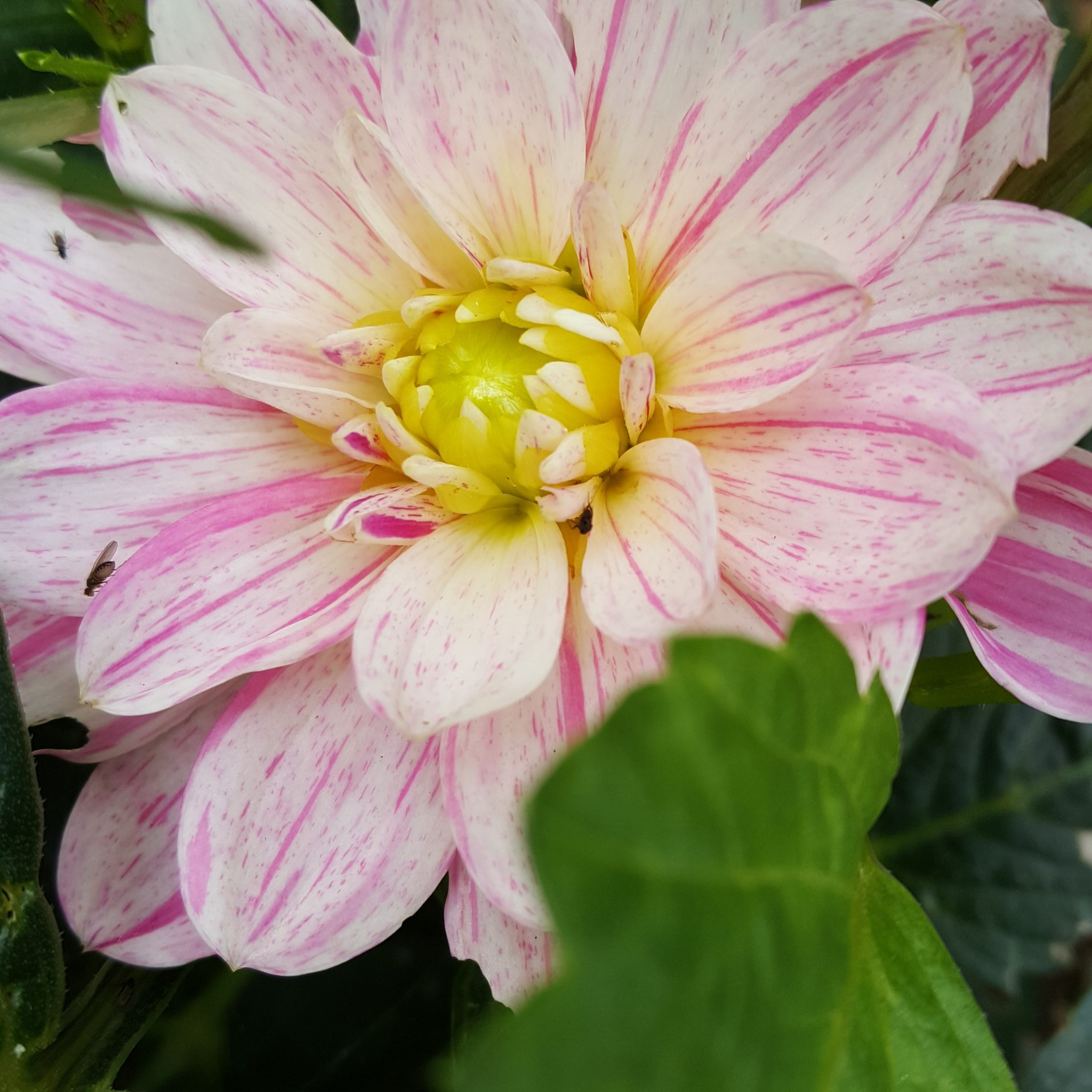 Grow | Of Flowers & Harvests