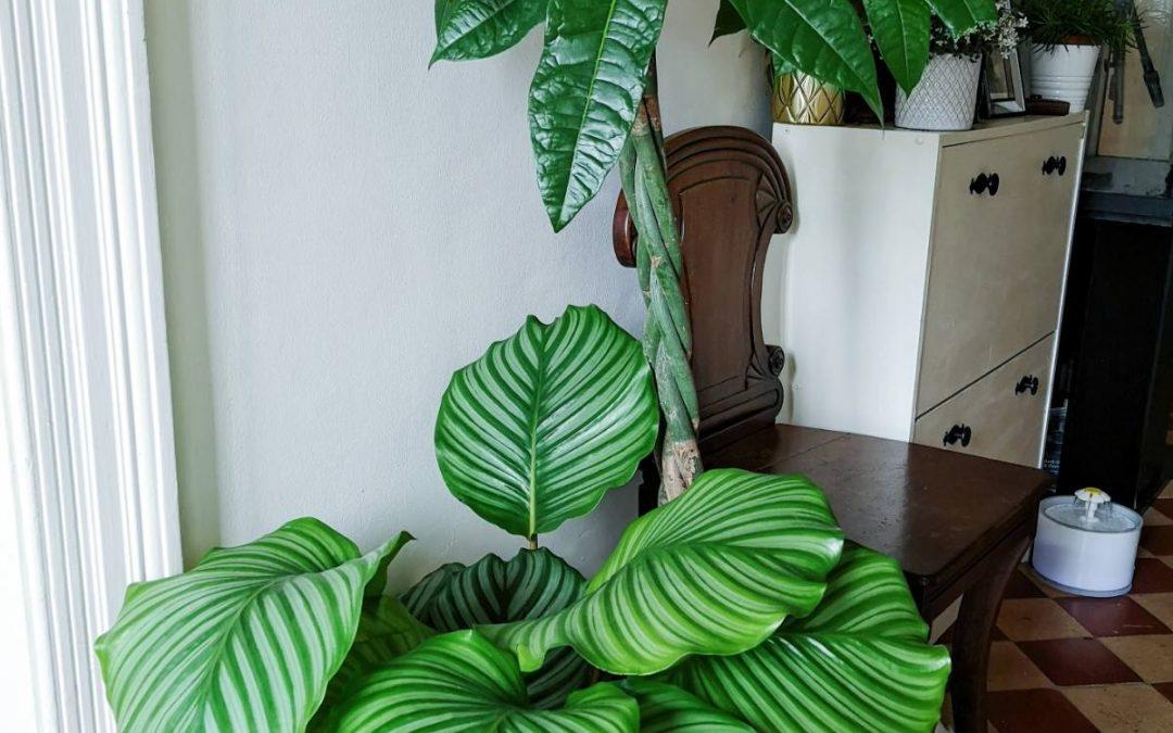 Six on Saturday – Houseplants